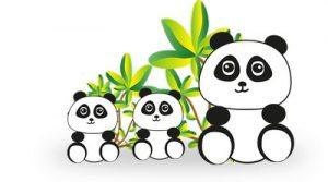 Pandas Streptococcus Pyogenes